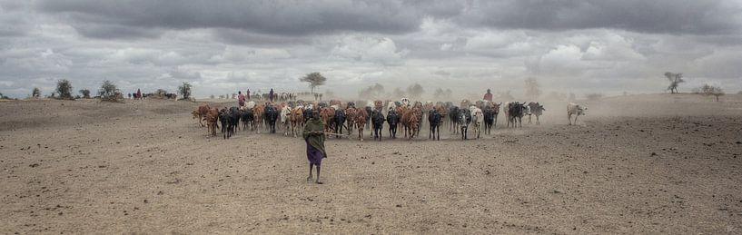 Masai Herd van BL Photography