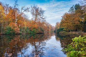 kleurrijk vergezicht met herfstkleuren in de het bos van eric van der eijk