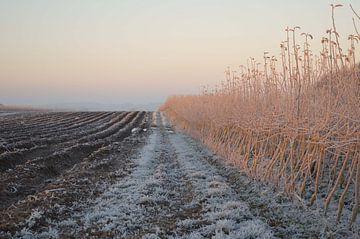 Winterlandschap van Fraukje Vonk