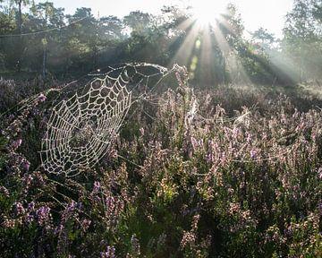 Ochtendzon op de Loonse en Drudense Duinen van Jasmijn Fotografeert