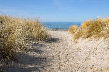 Fußweg zum Strand durch die Sanddünen mit Strandhafer (Ammophila arenaria) an der Ostsee, blaues Was von Maren Winter