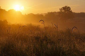 Sonnenaufgang in den Dünen von elma maaskant