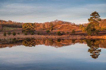 Spiegelbild auf der Heide im goldenen Licht des Sonnenaufgangs von John van de Gazelle