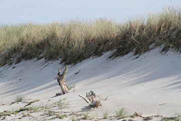Opvallende blikvanger: Boomwortel in de duinen van Anja Bagunk