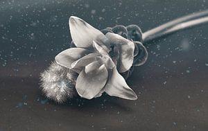Carcuma met siergras. prachtige snijbloem ook wel Thaise tulp genoemd van