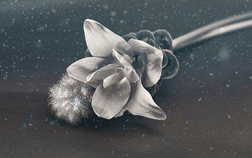 Carcuma met siergras. prachtige snijbloem ook wel Thaise tulp genoemd van Wendy Tellier - Vastenhouw