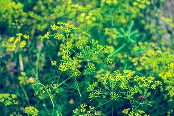 Eine Wiese mit Pflanzen von YesItsRobin