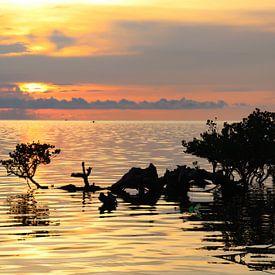 Tropische zonsondergang boven zee en mangroves von Arthur Puls Photography