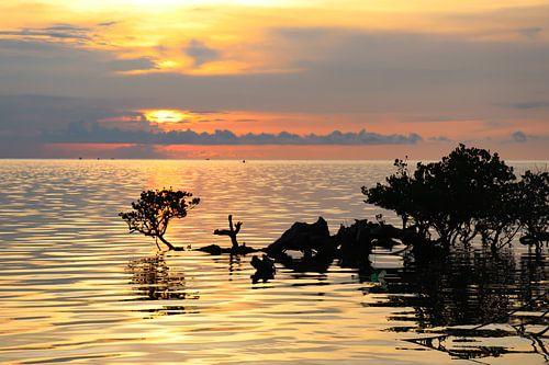 Tropische zonsondergang boven zee en mangroves