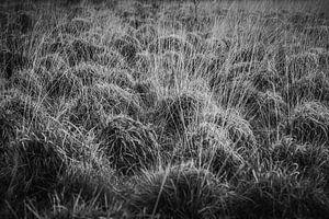Natuur in zwart/wit