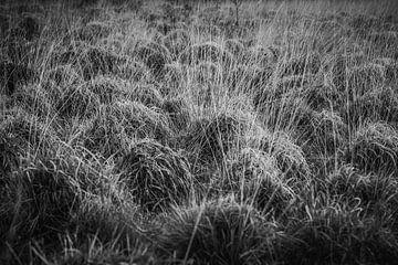 Natuur in zwart/wit van Ina Muntinga