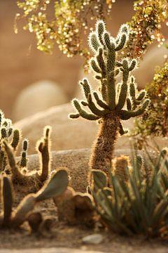 Woestijn close-up van