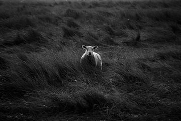Einsame Schafe von EMVDS photography