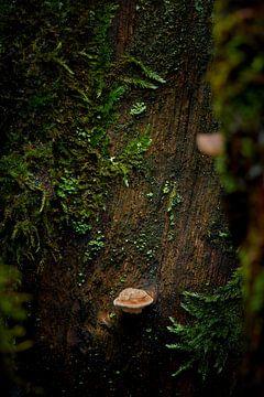 Kleine wereld op een boomstam van Jenco van Zalk