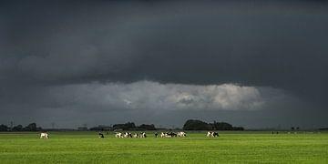 Dreigende lucht met koeien in het laatste straaltje zonneschijn van Harrie Muis