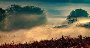 Zee van Nevel