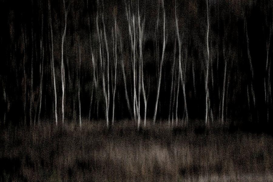 Dark wood van Greetje van Son