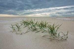 Beach on the North Sea island Amrum
