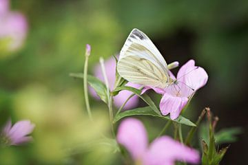 Witte vlinder van Lonneke Prins