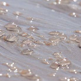 Seestachelbeeren am Strand von Marc Heiligenstein