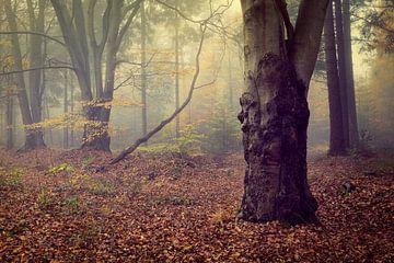 Sfeervol mistig herfstbos tafereel