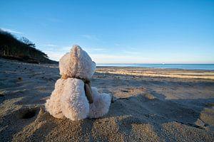 trauriger Teddybär mit Fernweh am Strand von Warnemünde
