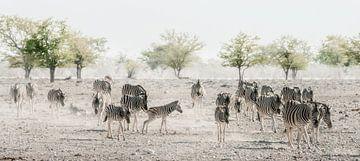 Zebra's door het stof van Joris Pannemans - Loris Photography