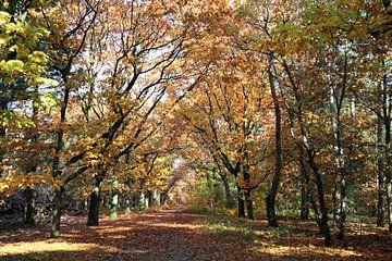 Gouden herfstbos van Jolanta Mayerberg