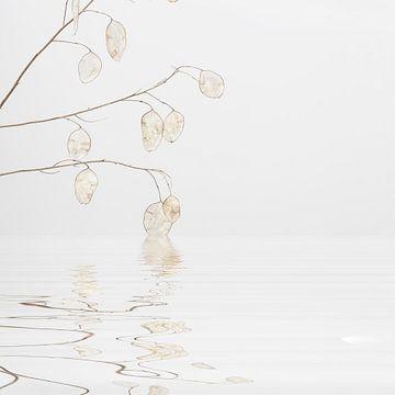 Schoonheid van de natuur van Andrea Haase