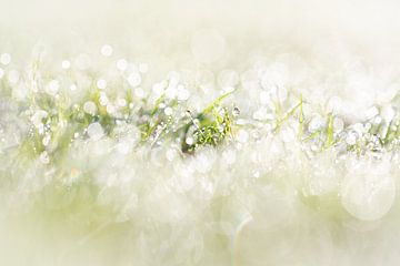 Tautropfen auf dem Gras am Morgen mit einem schönen Bokeh von KB Design & Photography (Karen Brouwer)