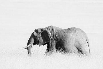 Eléphant dans l'herbe - High Key sur Angelika Stern