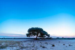 Ein Wald von einem von Thomas Duiker