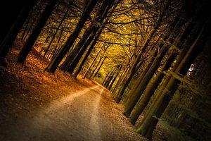 boslaan van goud van Marloes Hoekema