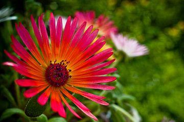 Flower von Patrick Bongers