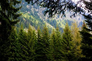 Prachtig bos van Thomas Jäger