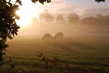 Paarden von Jan Linschoten