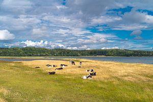 Dänische Natur mit Kälbern von Tina Linssen