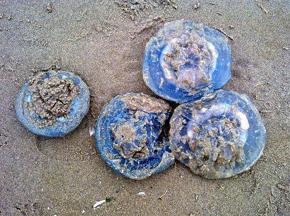 De vier blauwe kwallen