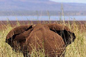 Olifant in het gras van Bart van Mastrigt