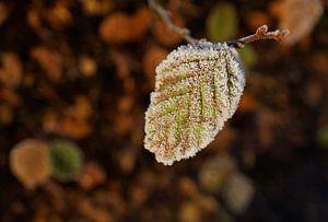 Herfstblaadje met rijp