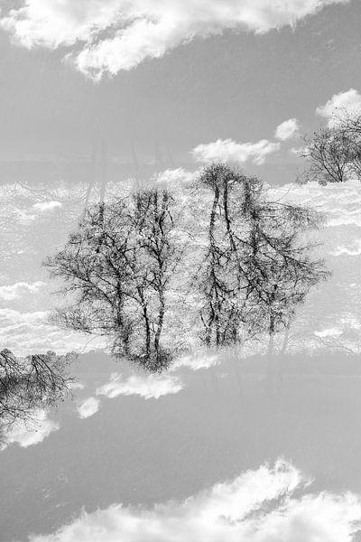 Gespiegelde bomen (1) van Mark Scheper