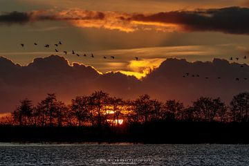 Ganzen bij Zonsondergang von Wil de Boer