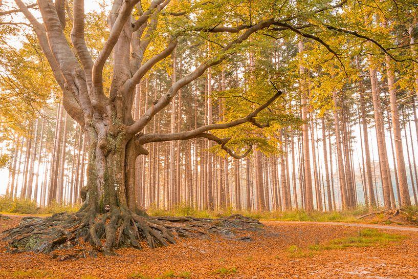 De koning van het woud van Pascal Teschner