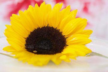 Eine gelbe Sonnenblume von Wendy Tellier - Vastenhouw