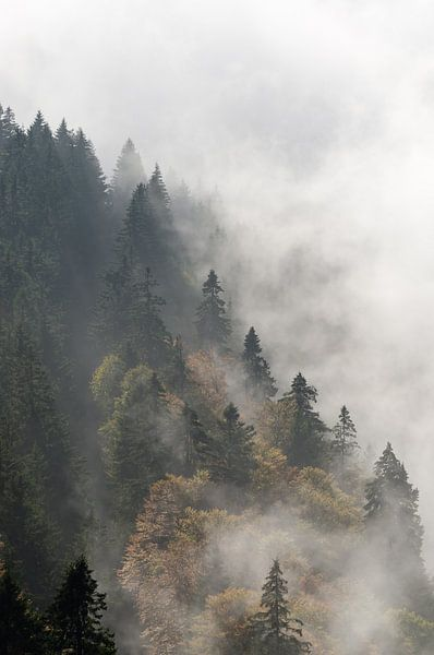 Cloud forest van Michael Valjak