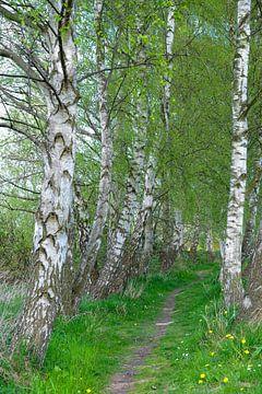 Birkenweg van Ostsee Bilder