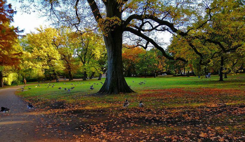 im Eichenpark van Peter Norden