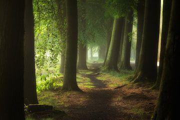 Het pad van