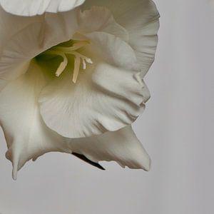 Bloem van een gladiool