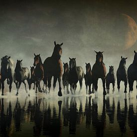 Tierreich  – Pferde stürmen im Meer von Jan Keteleer